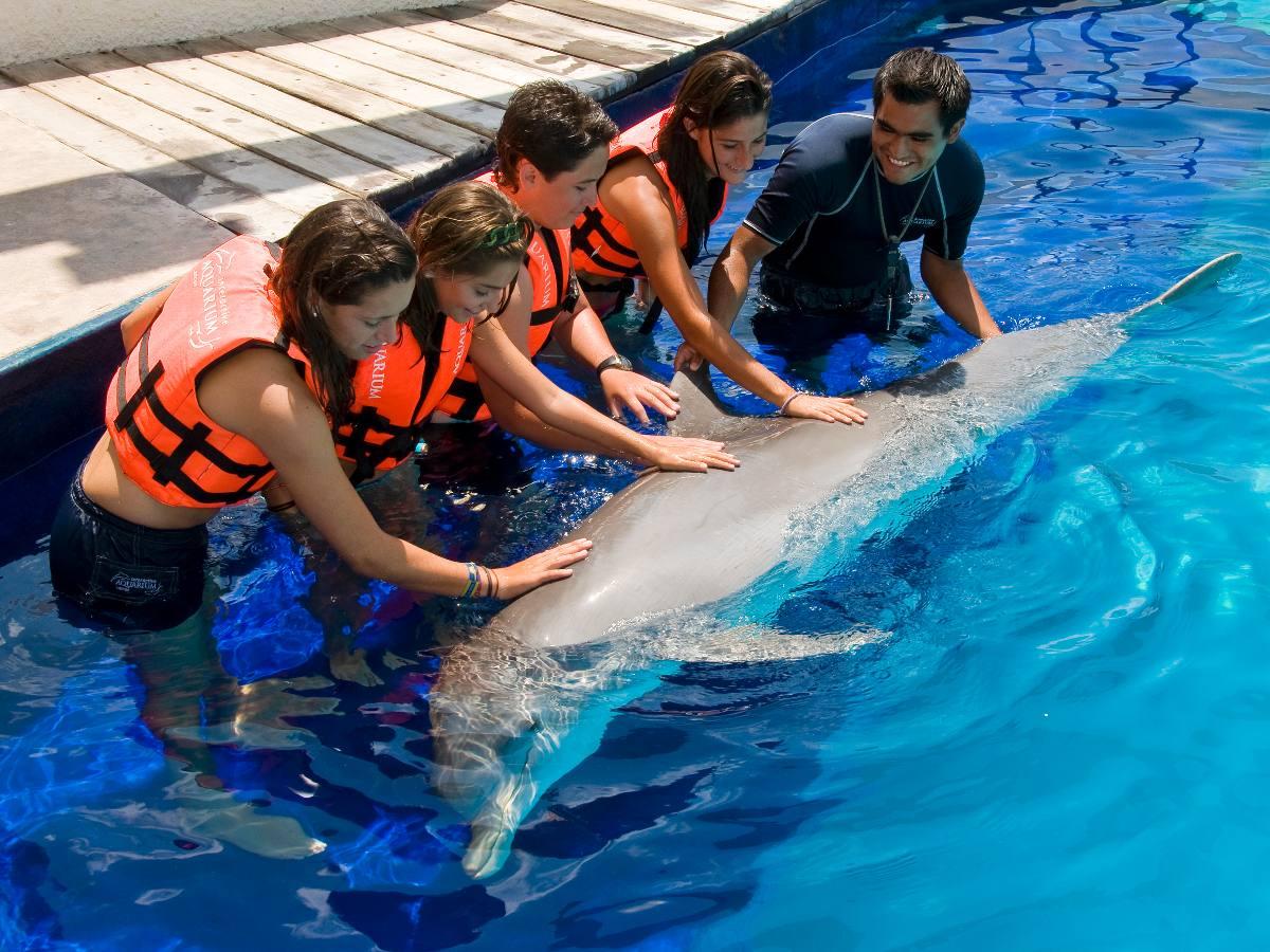 encuentro-con-delfines-cancun-D_NQ_NP_14934-MLM6265699663_052014-F