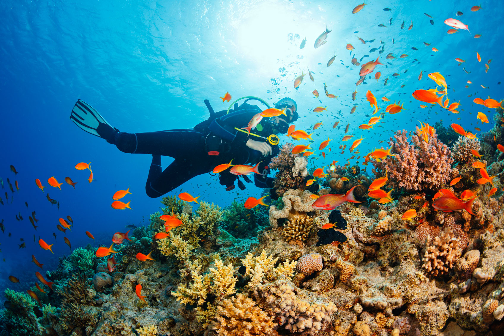 Underwater-Scuba-diver-explore-and-enjoy-Coral-reef-Sea-life